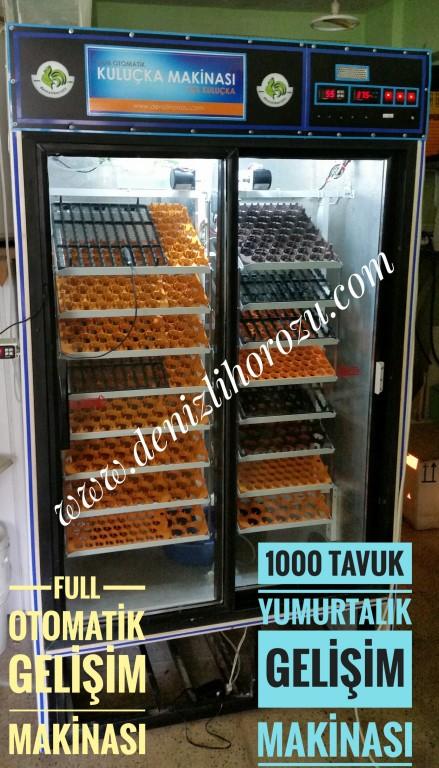 1000 Yumurtalık GELİŞİM Makinesi  01