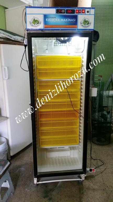 486 Yumurtalık ÇIKIM Makinesi 02